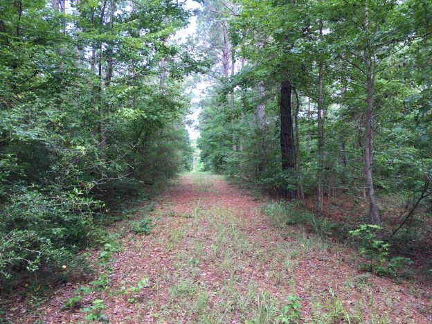Dodson Timber Tract, Winn Parish, 80 Acres +/-