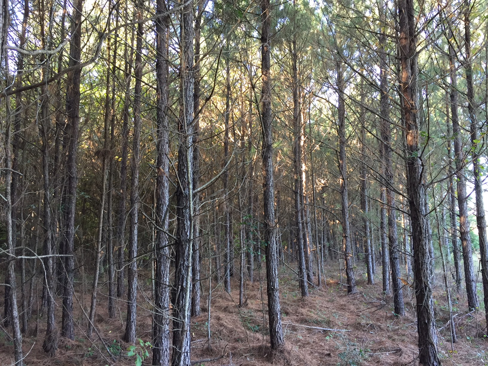 Girl Scout Tract, Bienville Parish, 60 Acres +/-