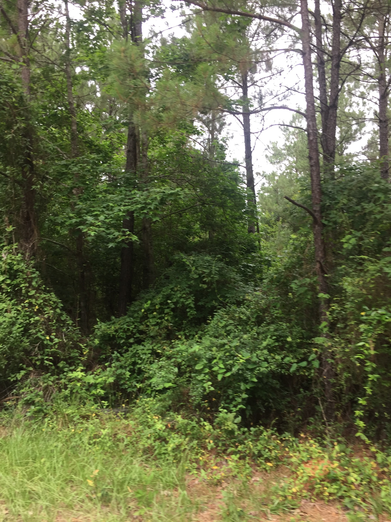 Sandy creek tract vernon parish 199 acres mossy for Sandy creek