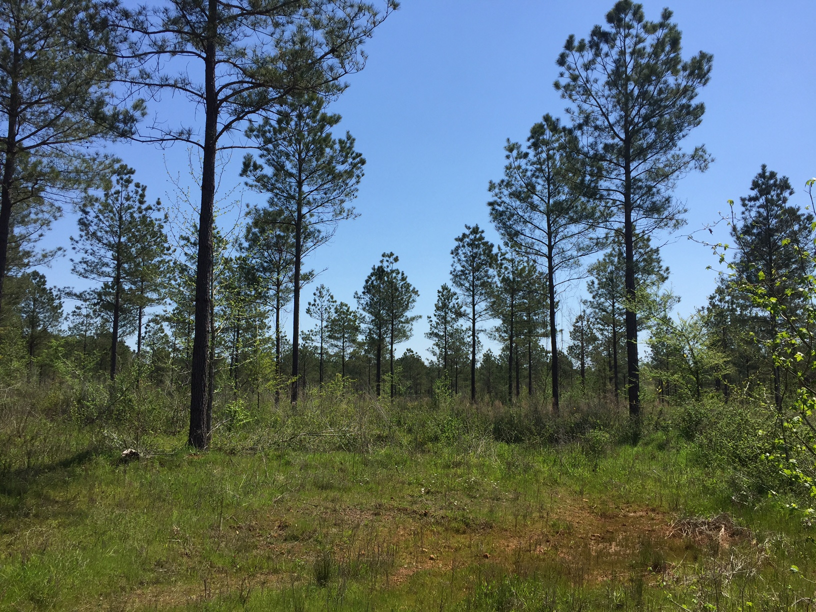 Sugar Creek Tract, Jackson Parish, 11 Acres +/-
