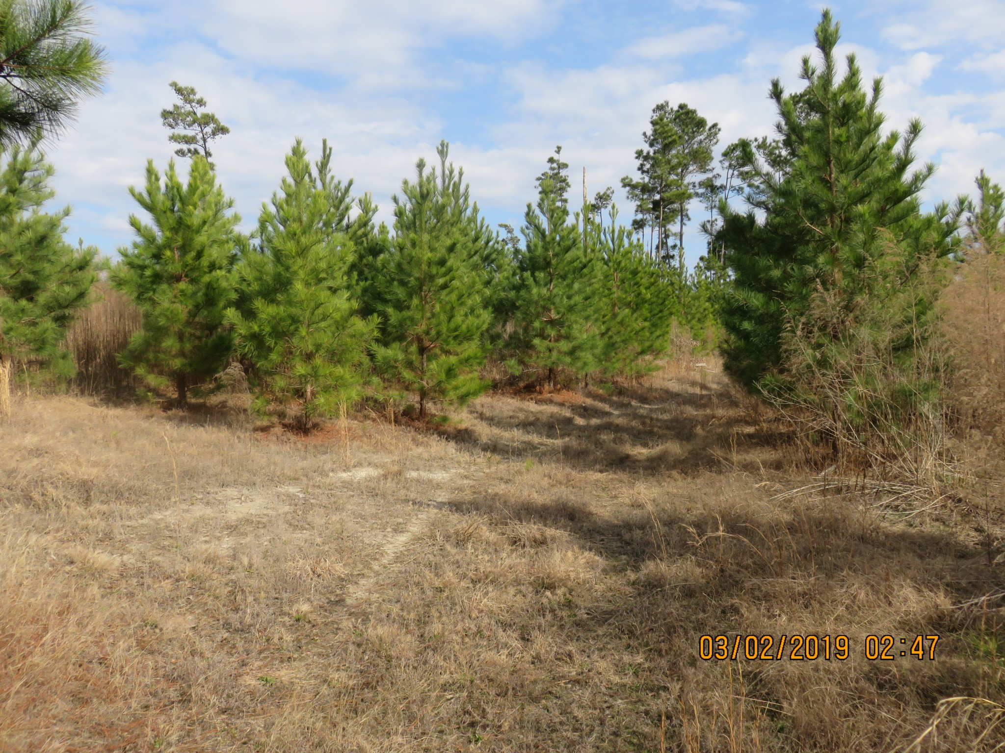 Ebenezer Tract, Union County, Arkansas, 124 Acres +/-