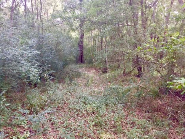 1001 Andrew Mouhot Road Tract, Beauregard Parish, 19 Acres +/-