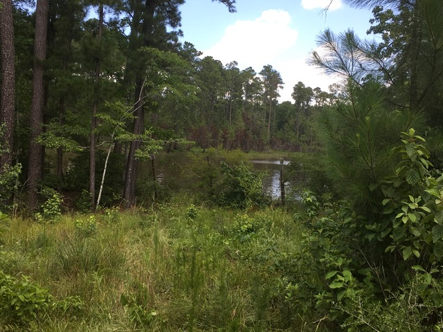 Powell East Tract, Vernon Parish, 75 Acres +/-