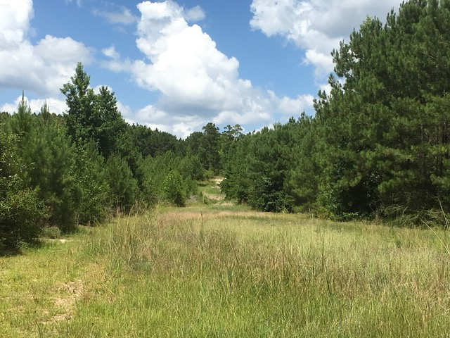 Beckom Tract Hwy 473, Sabine Parish, 191 Acres +/-