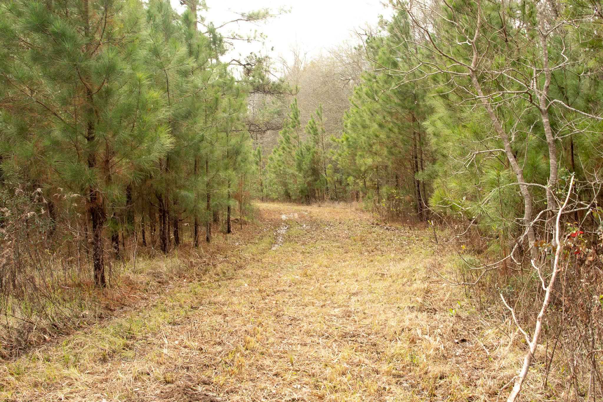 176 Smokey Cove Road Tract, Beauregard Parish, 25 Acres +/-