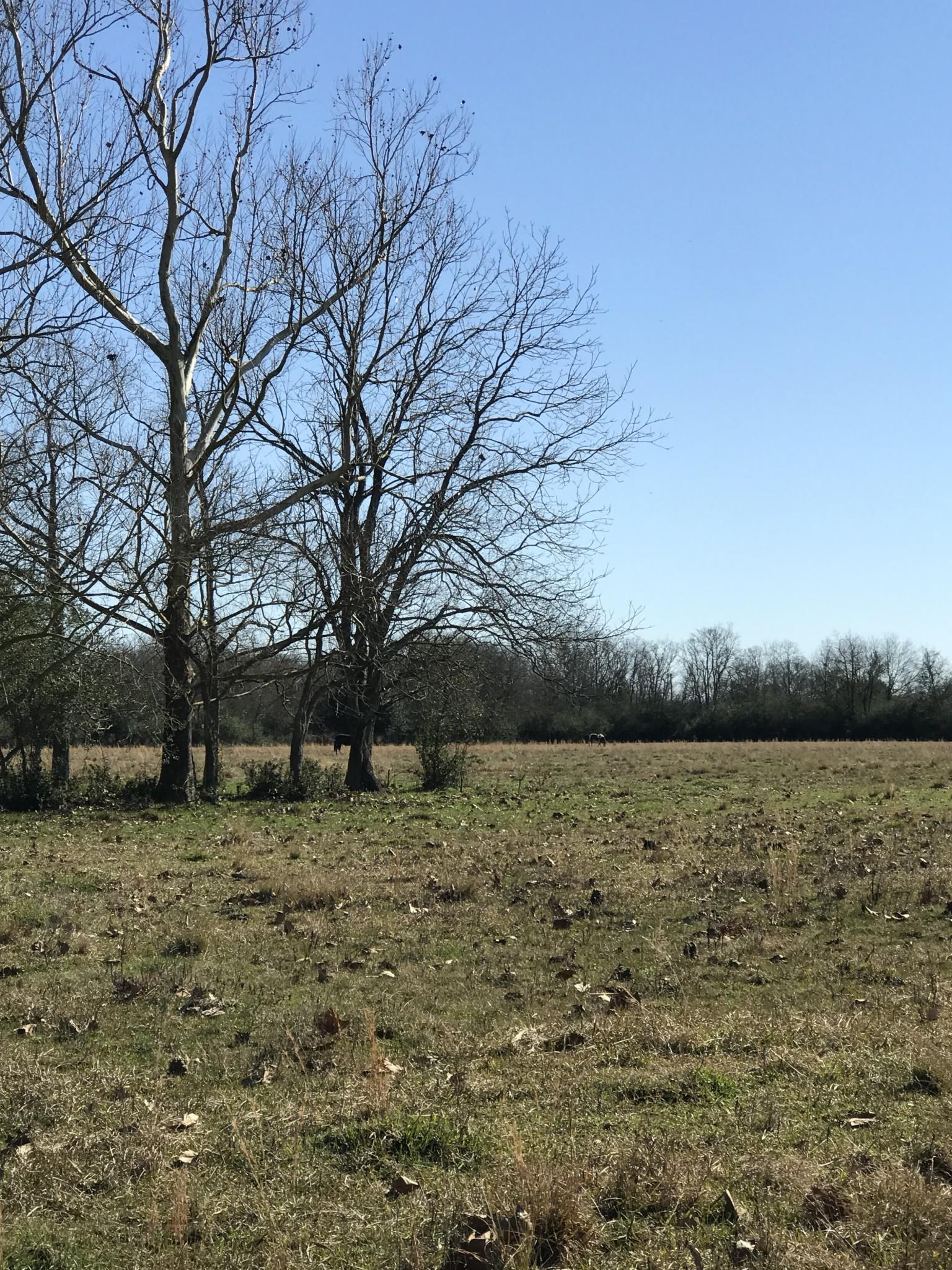 Highway 1163 Tract, Evangeline Parish, 53 Acres +/-
