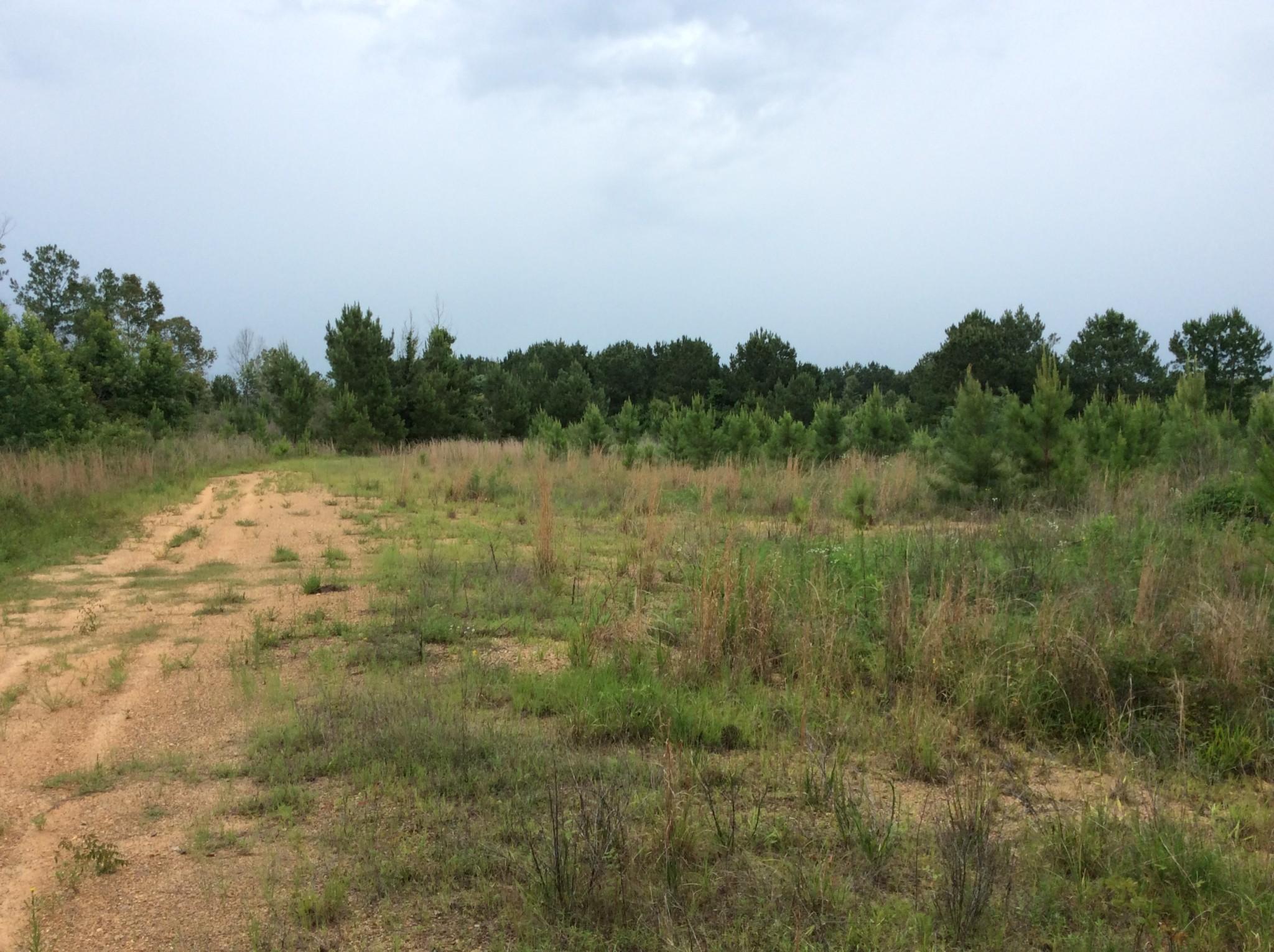 Robbins Creek Tract, Winn Parish, 72 Acres +/-