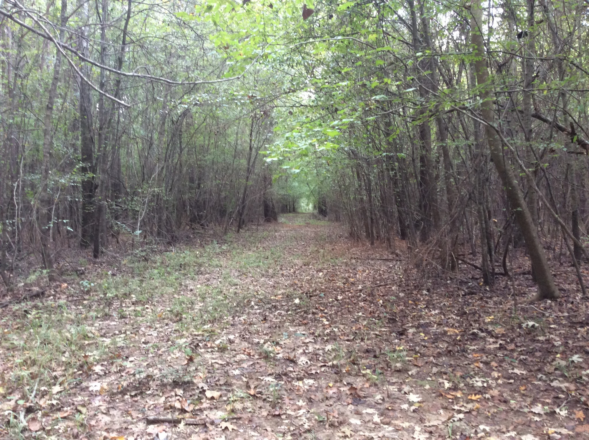 Jones Creek Tract, LaSalle Parish, 120 Acres +/-