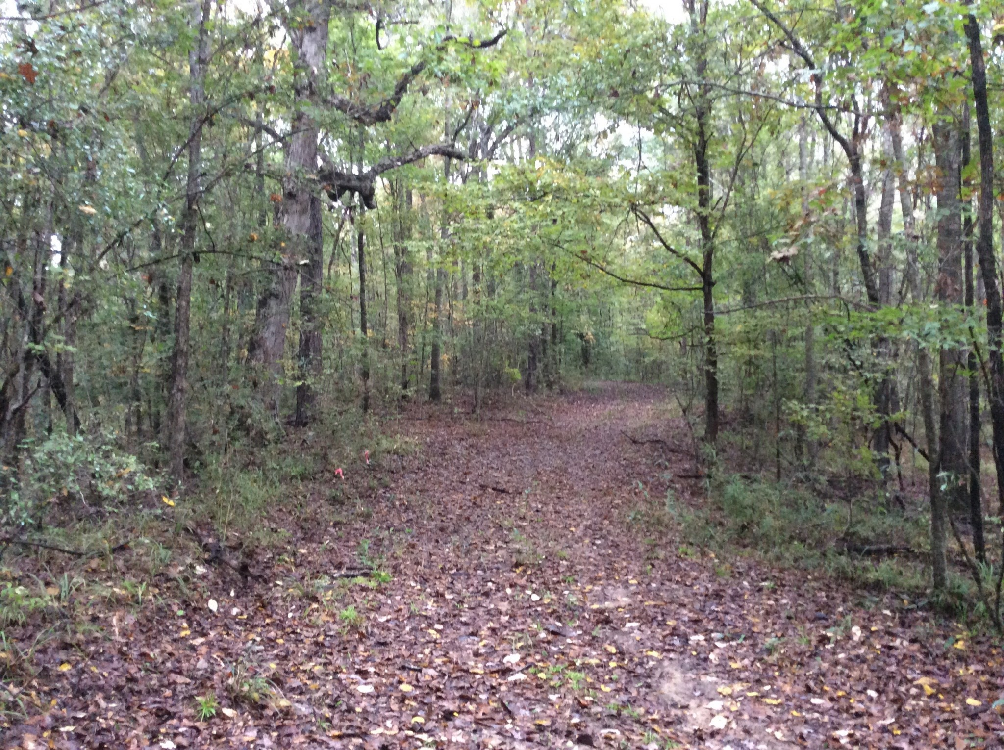 Seale Road Tract, Franklin County, MS, 95 Acres +/-