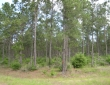 main-pipeline-loblolly-stand