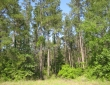 northern-pine-tract