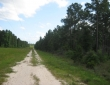 pipeline-n-s-rd-pine-stand-food-plot-road-system