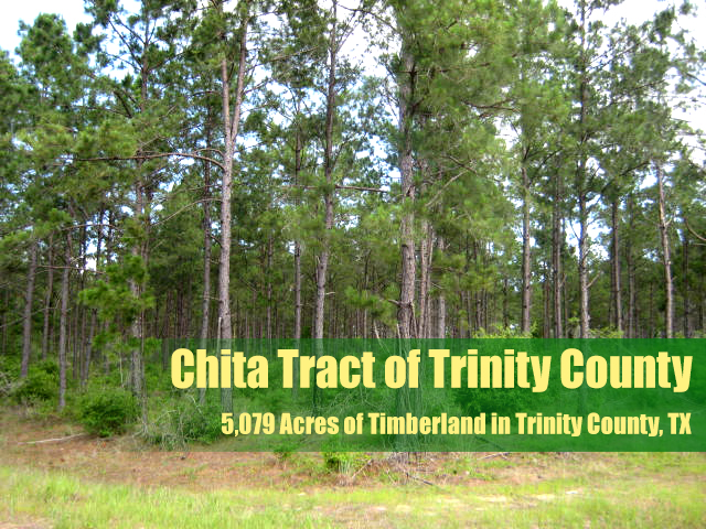 Trinity County Timberland property for sale