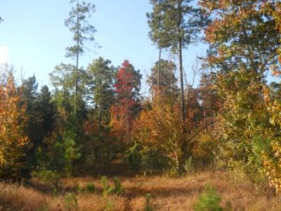 Union County Timberland for sale