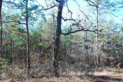 Bossier Parish Timberland property for sale