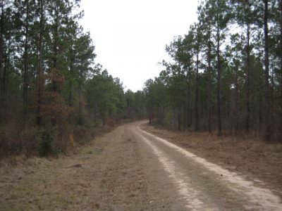 Point Blank Tracts of San Jacinto County, TX_3,191 Acres