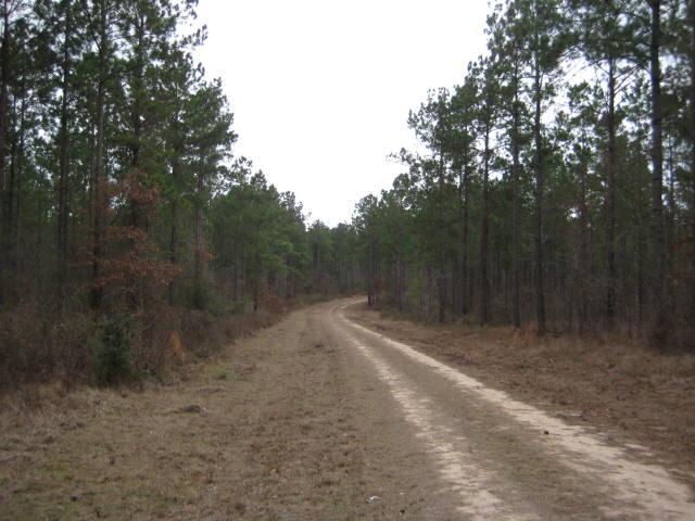 San Jacinto County Timberland property for sale