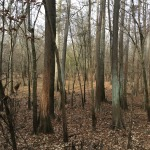 Timberland for sale in Winn Parish