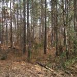 Recreational property for sale in Winn Parish