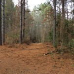 Winn Parish Timberland property for sale