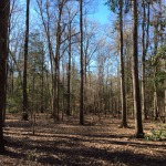 Recreational land for sale in Winn Parish