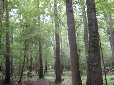 Timberland for sale in Calcasieu Parish