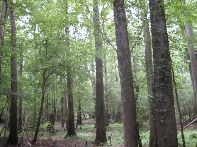Timberland for sale in Calcasieu Parish