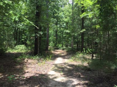 Timberland property for sale in Ouachita Parish