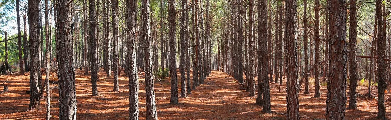 pine plantation land broker
