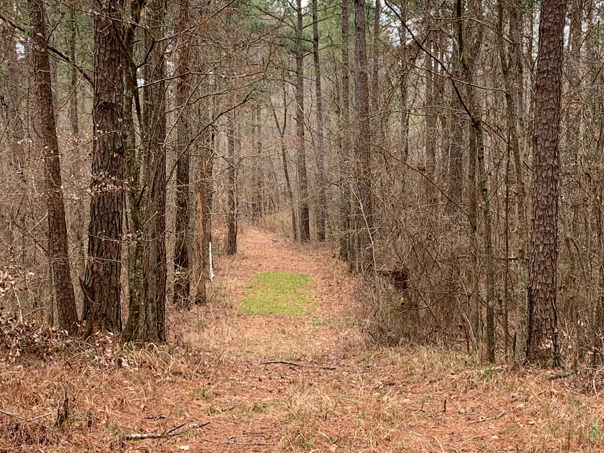 Jarmon Rd Tract, Lincoln Parish, 40 acres +/-