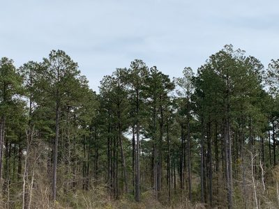 Investment land for sale in Union Parish