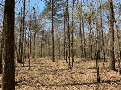 Timberland for sale in Morehouse Parish