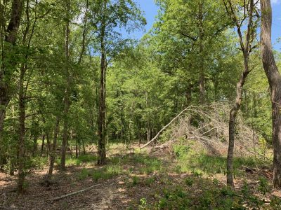 Development property for sale in Jackson Parish