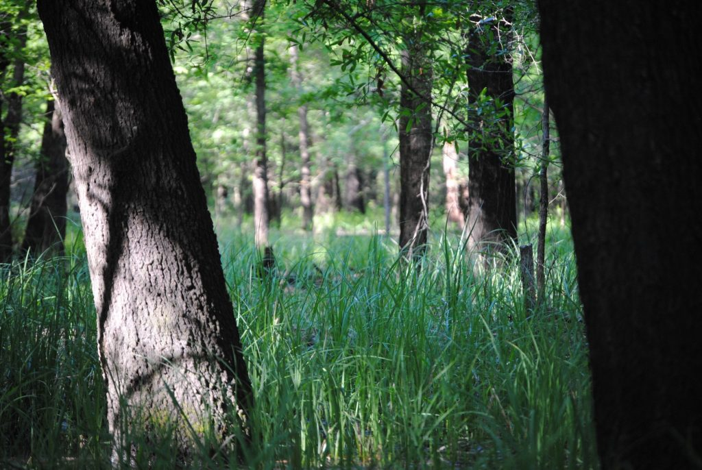 Louisiana flooded timber property for sale