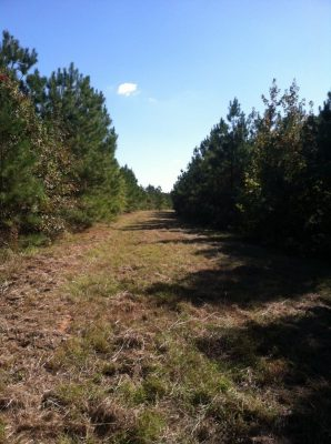 Webster Parish Investment property for sale