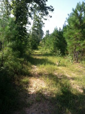 Development land for sale in Bienville Parish