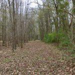Rapides Parish Investment property for sale
