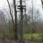 Rapides Parish Timberland for sale