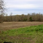 Timberland property for sale in Rapides Parish