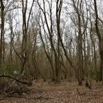 Investment land for sale in Rapides Parish