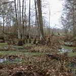 Recreational land for sale in Rapides Parish