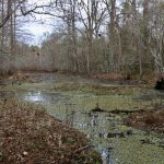 Timberland for sale in Rapides Parish
