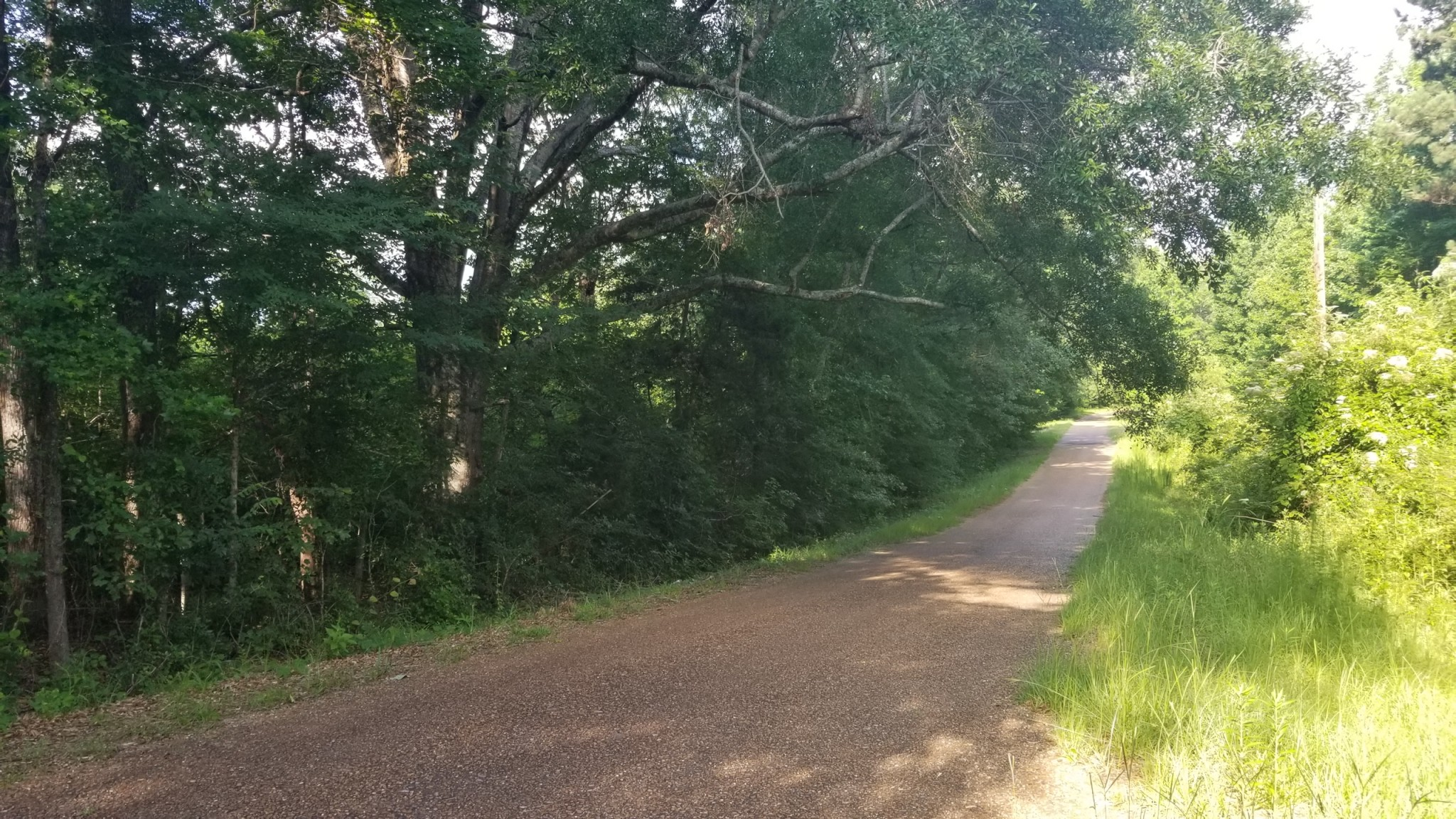Brushy Creek Tract, LaSalle Parish, 60 Acres +/-