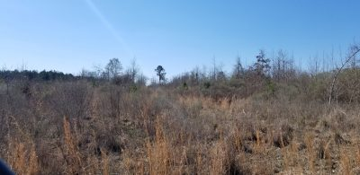 The Hooterville 80, Caldwell Parish, 80 Acres +/- LACALDCA80