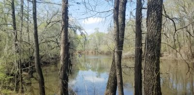 Saline Bayou Land and Camp, Winn Parish, 110 Acres +/- LAWINNCA110