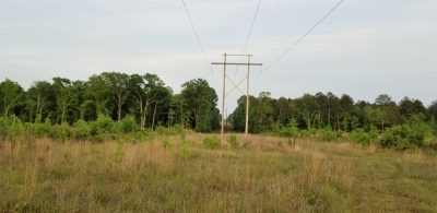 Sandy Creek Forty, Winn Parish, 40 Acres +/- LAWINNCA40