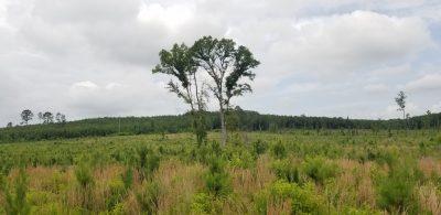 Evergreen Pines Tract, Union Parish, 70 Acres +/-