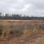 Winn Parish Agricultural property for sale