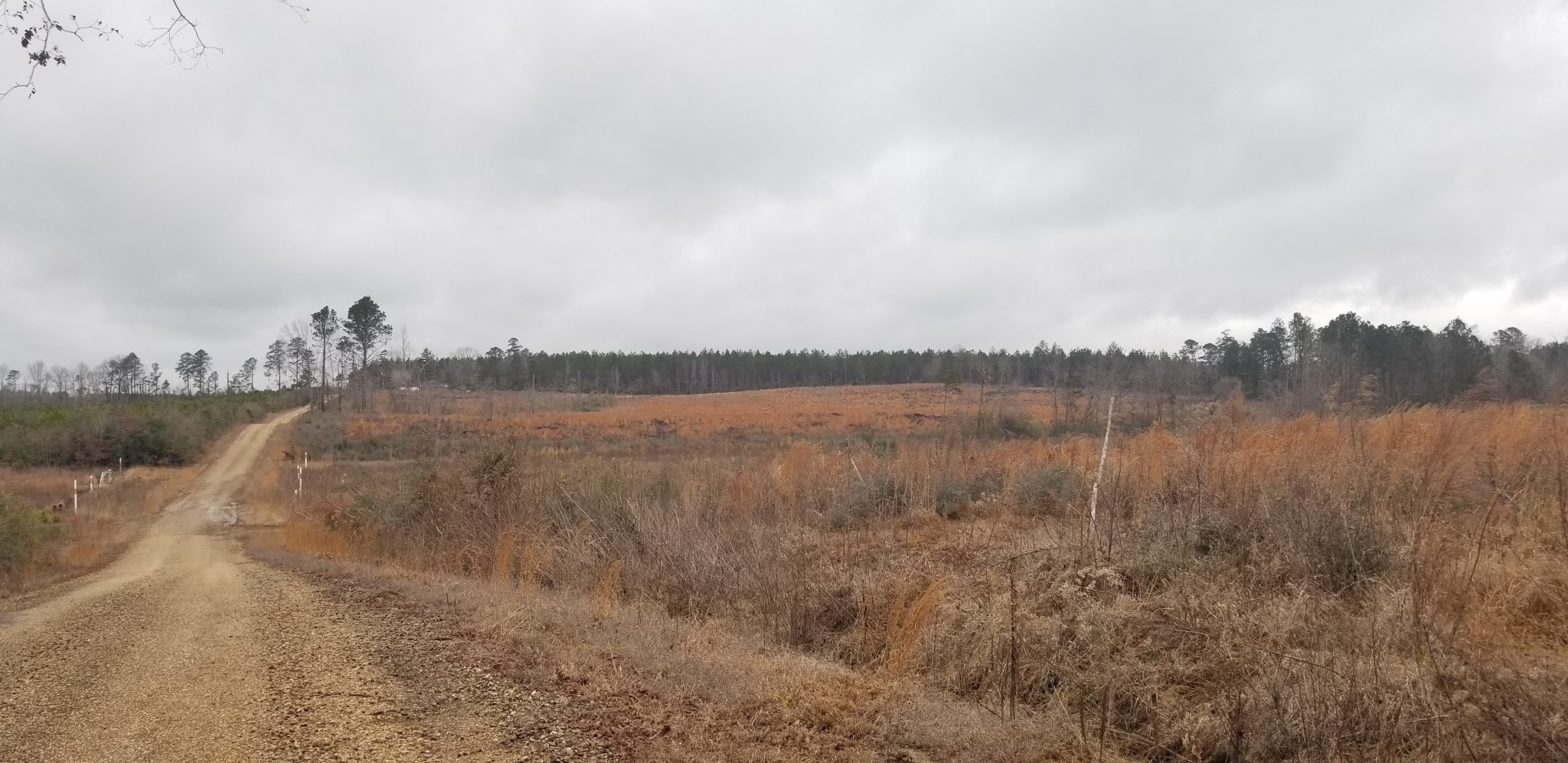 Winn Parish Agricultural land for sale