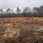 Hunting land for sale in Winn Parish